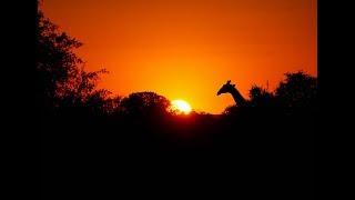 Animals of Namibia: Part V