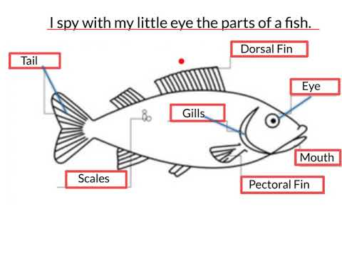 How To Draw Fish With Parts