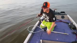 how not to boat a big cownose stingray (fishing fail)