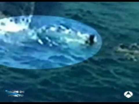 Ataque de tiburon blanco - Impacto TV