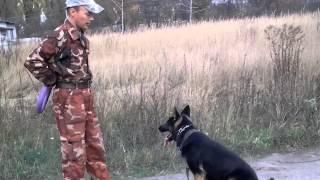 Приучение собаки к выполнению команд с помощью пуллера