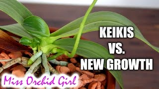 Orchid keiki Vs. new growth