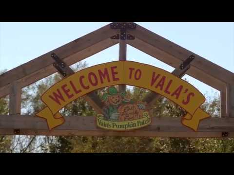 Vala's Pumpkin Patch, Fall Family Fun