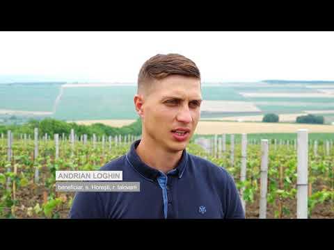Programul De Susținere A Tinerilor Antreprenori Din Republica Moldova
