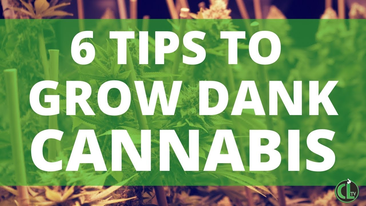 6 Tips For Growing Cannabis Indoors | Cannabis Lifestyle TV