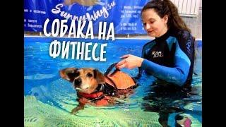 Собака учится ходить и плавать! Центр реабилитации для собак.