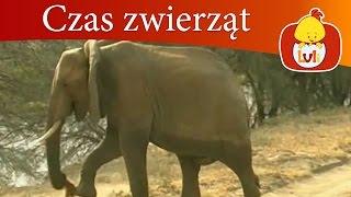 Czas zwierząt - Słoń + Motyl, dla dzieci Luli TV - Videos for babies