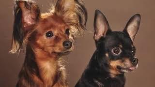 Собак выгуливать в намордниках