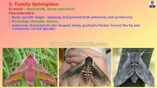 Lepidopteran Insect Family identification.mp4