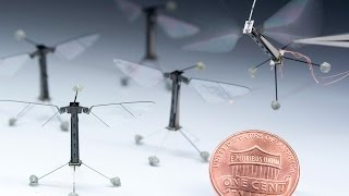 Crave - Tiny RoboBee could be first of flying, swimming robot swarm, Ep. 223