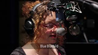 Blue Kiwi vs. Blue Bluebird (Female) | VO Mic Comparison