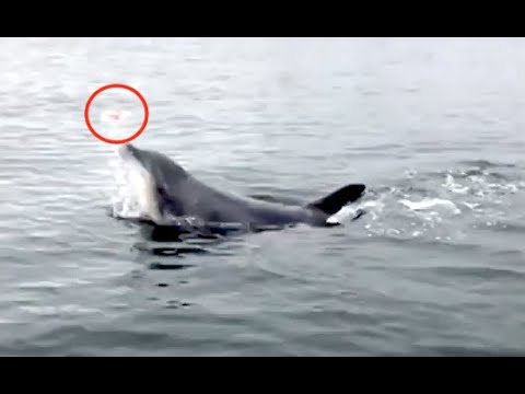 Bizarre Video Of The Day: A Dolphin Spotted Juggling A Jellyfish
