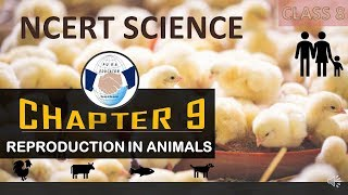 NCERT SCIENCE CLASS 8 CHAPTER 9 REPRODUCTION IN ANIMALS FOR UPSC IAS PRE,UPPCS,SSC,BANKING IN HINDI