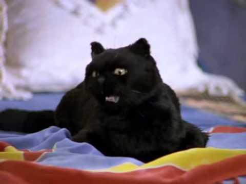 Сабрина как звали кота