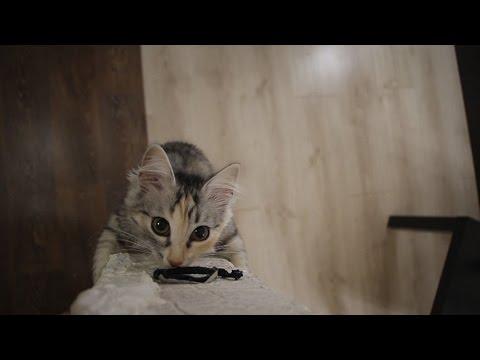 funny cat climber