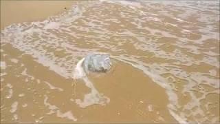 Медузы в Средиземном море