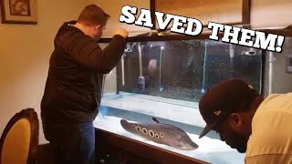 SAVING HUGE AQUARIUM FISH FROM SUDDEN DEATH! FISH RESCUE thumbnail