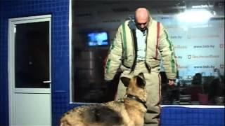 Уроки самообороны Как защититься от нападения собаки