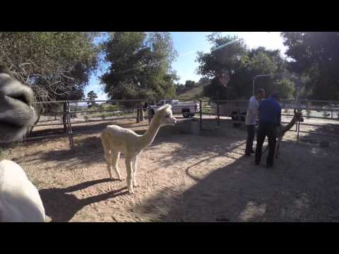 Mesa Fire Animal Evacuation