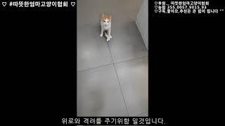[따뜻한엄마고양이협회]국화(후지마비)이야기......