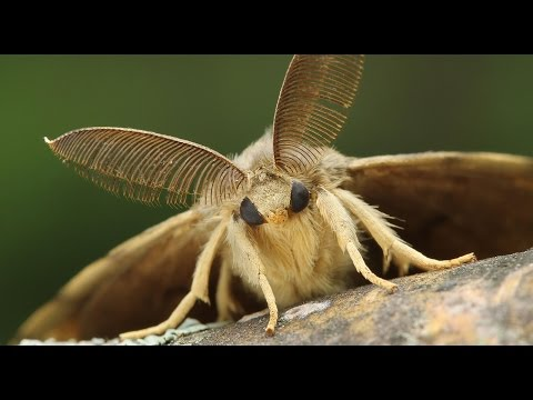 A Moth, Up Close and Personal