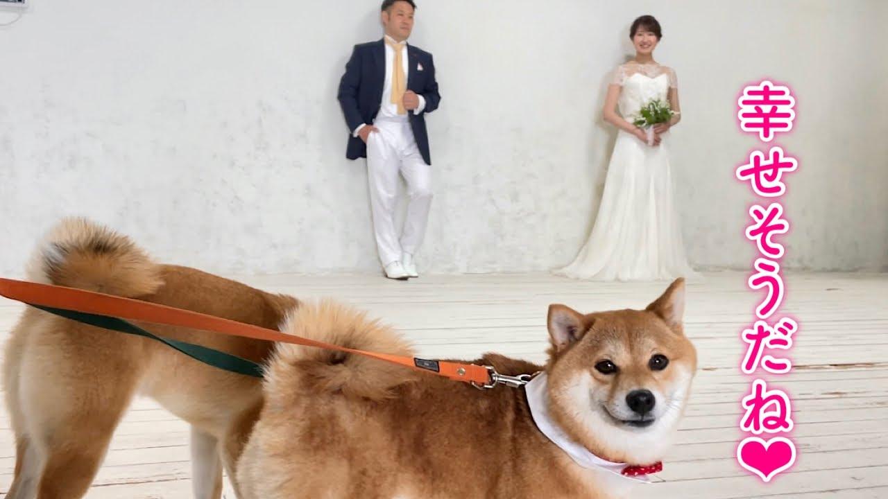 ママとパパの結婚写真に付き合ってくれる柴犬が可愛い