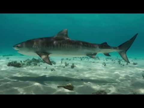 Remember - Blue Planet II Trailer