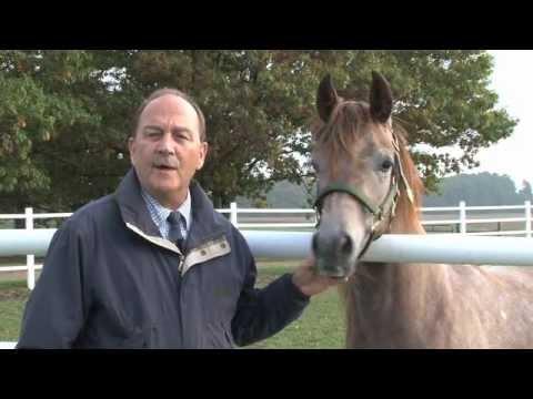Michigan State University Horse Programs