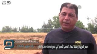 مصر العربية | بهجة حصاد