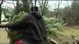 Zoo Animals Dine on Used Christmas Trees