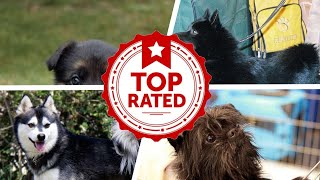 10 Curious Dog Breeds That Make Great Pets