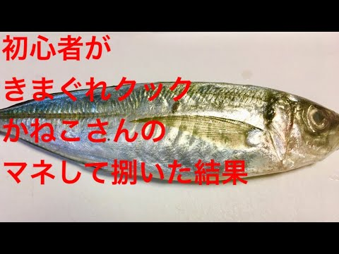 魚捌き初心者が、きまぐれクックかねこさんの動画を見てアジを捌いた結果・・・