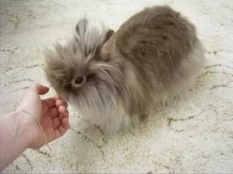 teddy bunny youtube