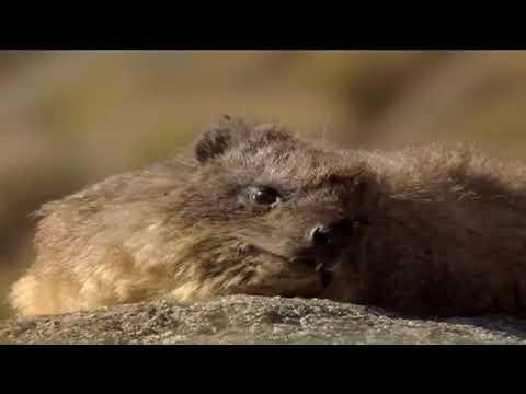 Honey Badger Narrates: The Wildlife of Beautiful Yemen