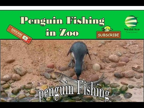 zoo animals Playing, Living Coast Torquay Zoo Part 2, Beautiful Animals