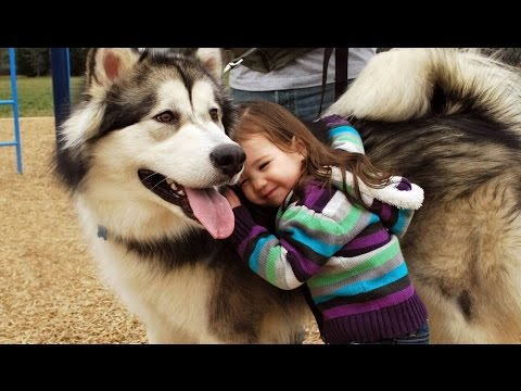 Funny Husky and Baby Videos Compilation (2017)