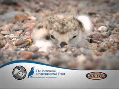Nebraska Environmental Trust_Tern&Plover.mpg