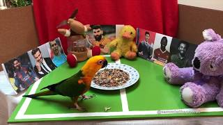 World Cup 2018 Round 2, Sammie the parrot's animal oracle predictions