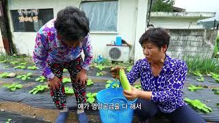 인제 서화리 우리집같은민박모녀의 옥수수떡
