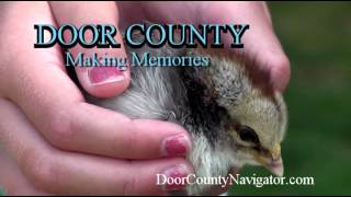 Door County Making Memories | Girl with Chick at THE Farm - Door County Activities
