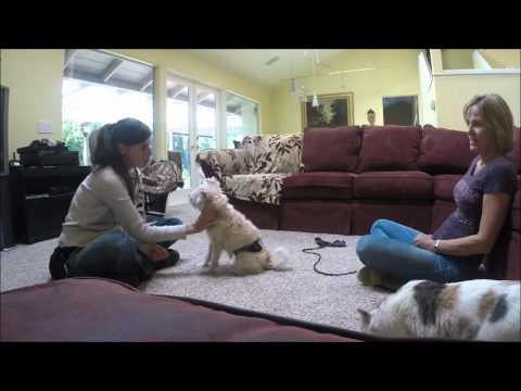 San Diego Animal Training: A Quick and Easy Way To Tell If Your Dog Enjoys Petting
