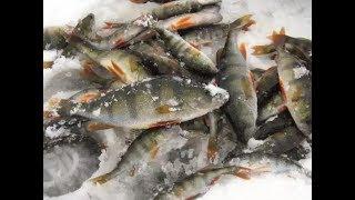 Рыбалка со льда не ТРОФЕЙНЫЙ ОКУНЬ!