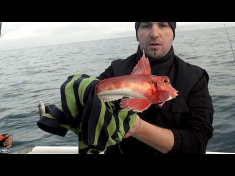 Boat Trips San Sebastian. Reportaje de pesca a fondo para caza y pesca.