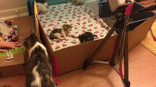 18 Day Old Kittens! Scope Helps Me Open Amazon Wishes!