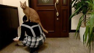 久々のおもしろ行動〜〜〜。 ついに猫宅の頂点に立った「ひろし」!! ...