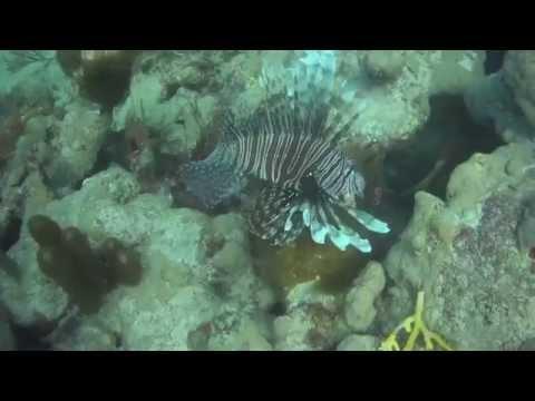Diving in Mayagüez