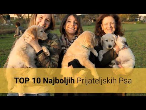 Prijateljski Psi – Top 10 Najboljih Prijateljskih Pasmina Pasa Na Svijetu 🐕
