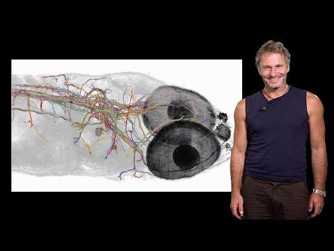 Florian Engert (Harvard) 1: Fish in the matrix: neuronal activity & behavior in virtual environments