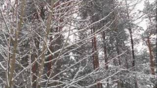 Relaxing nature scenes & chinese instrumental music - In The Forest In Winter Season V