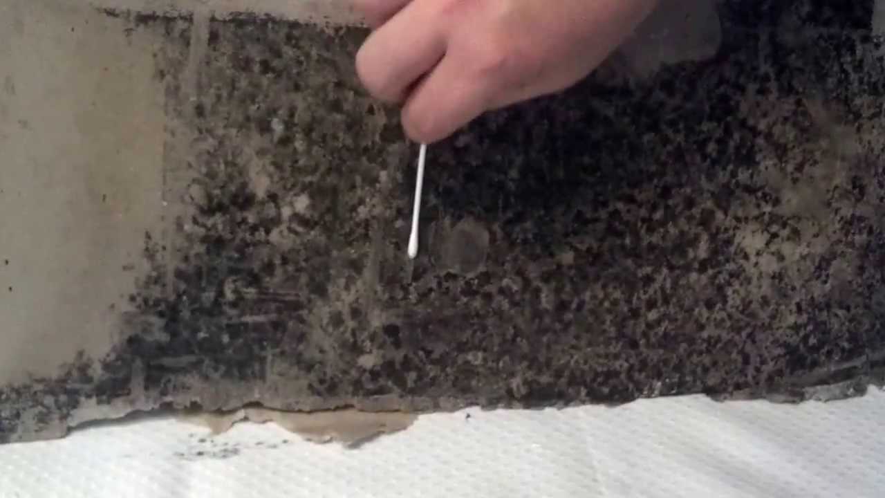 Video tutorial do it yourself mold swab test kit by titanium video tutorial do it yourself mold swab test kit by titanium laboratories solutioingenieria Choice Image